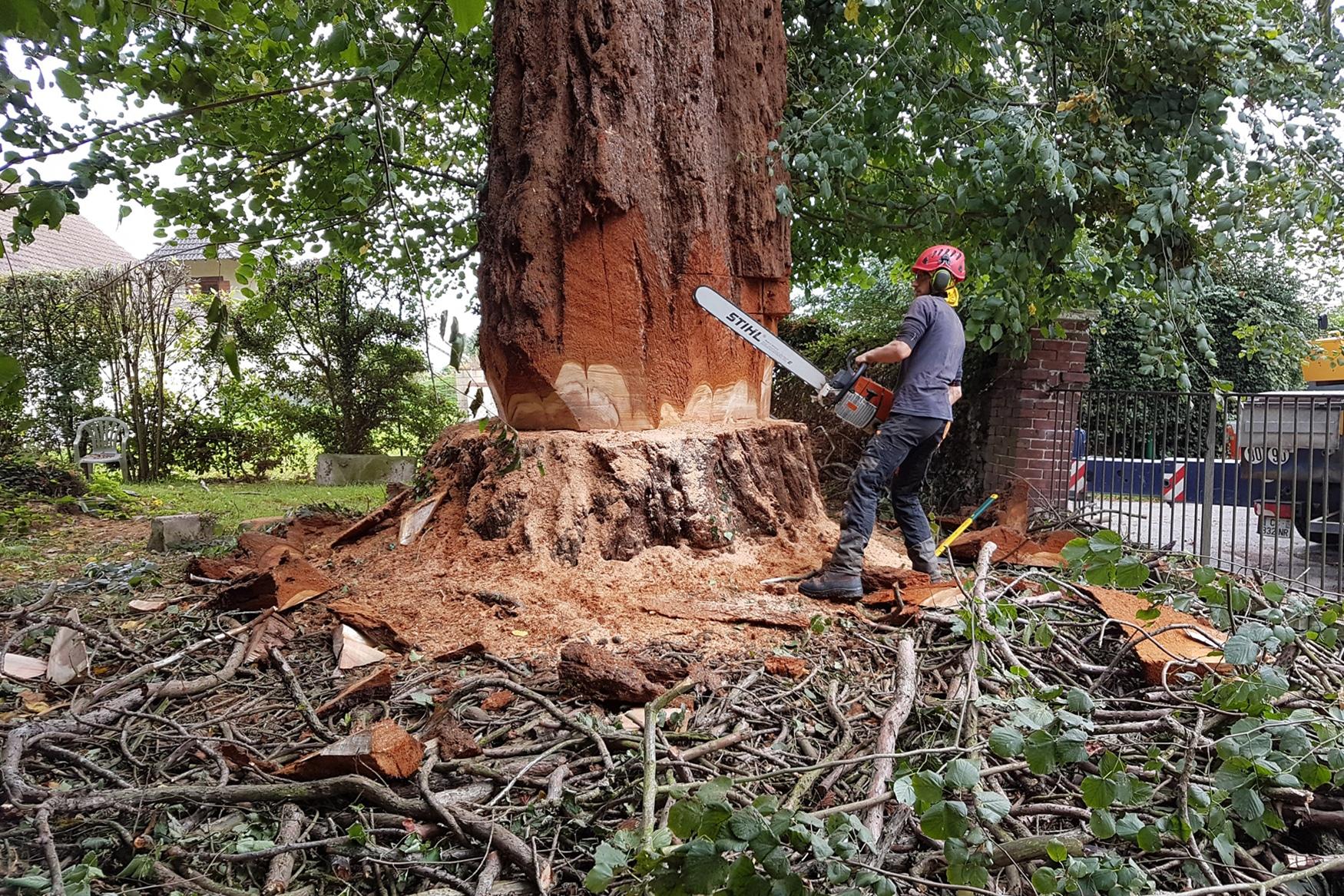 Abattage d'arbre à Rouen