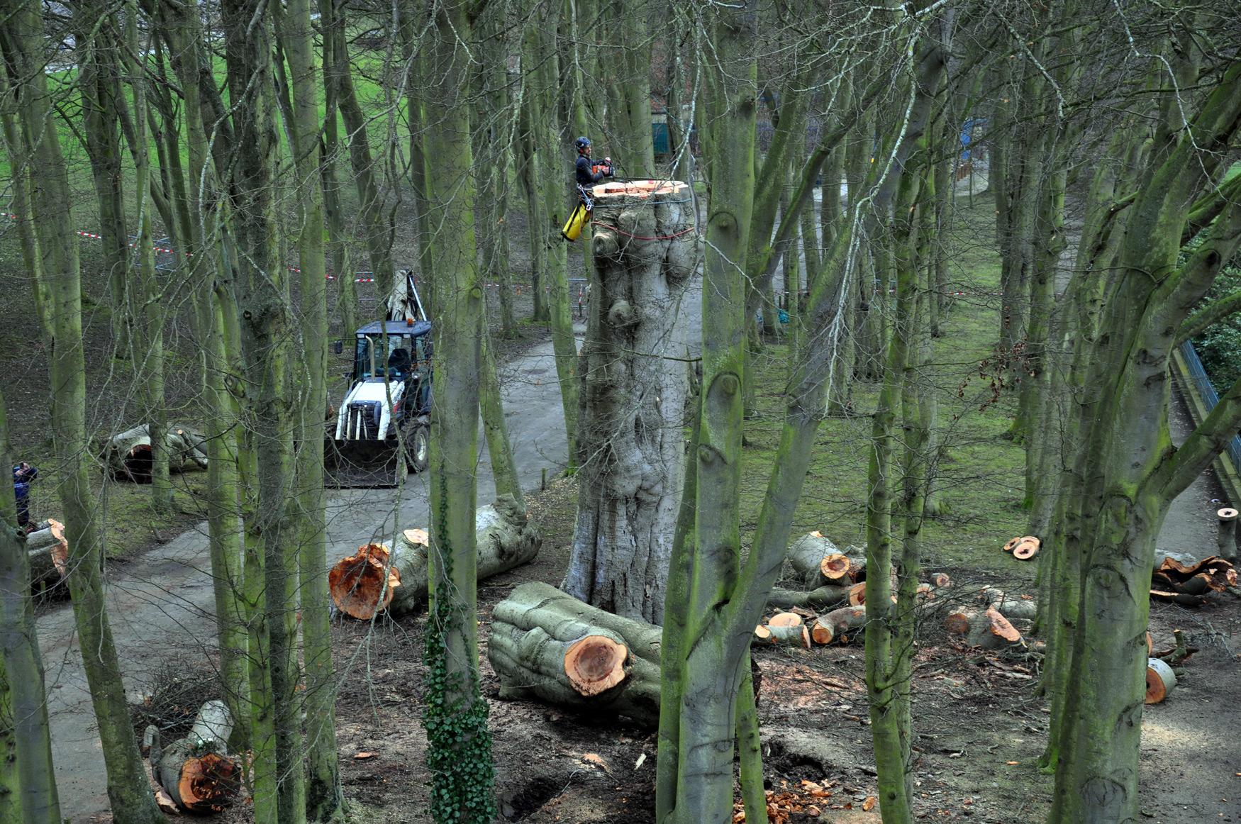 Abattage d'arbre Rouen