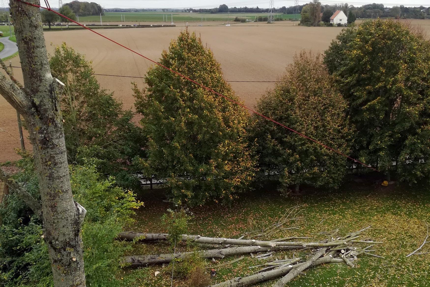 Abattage par démontage d'arbres