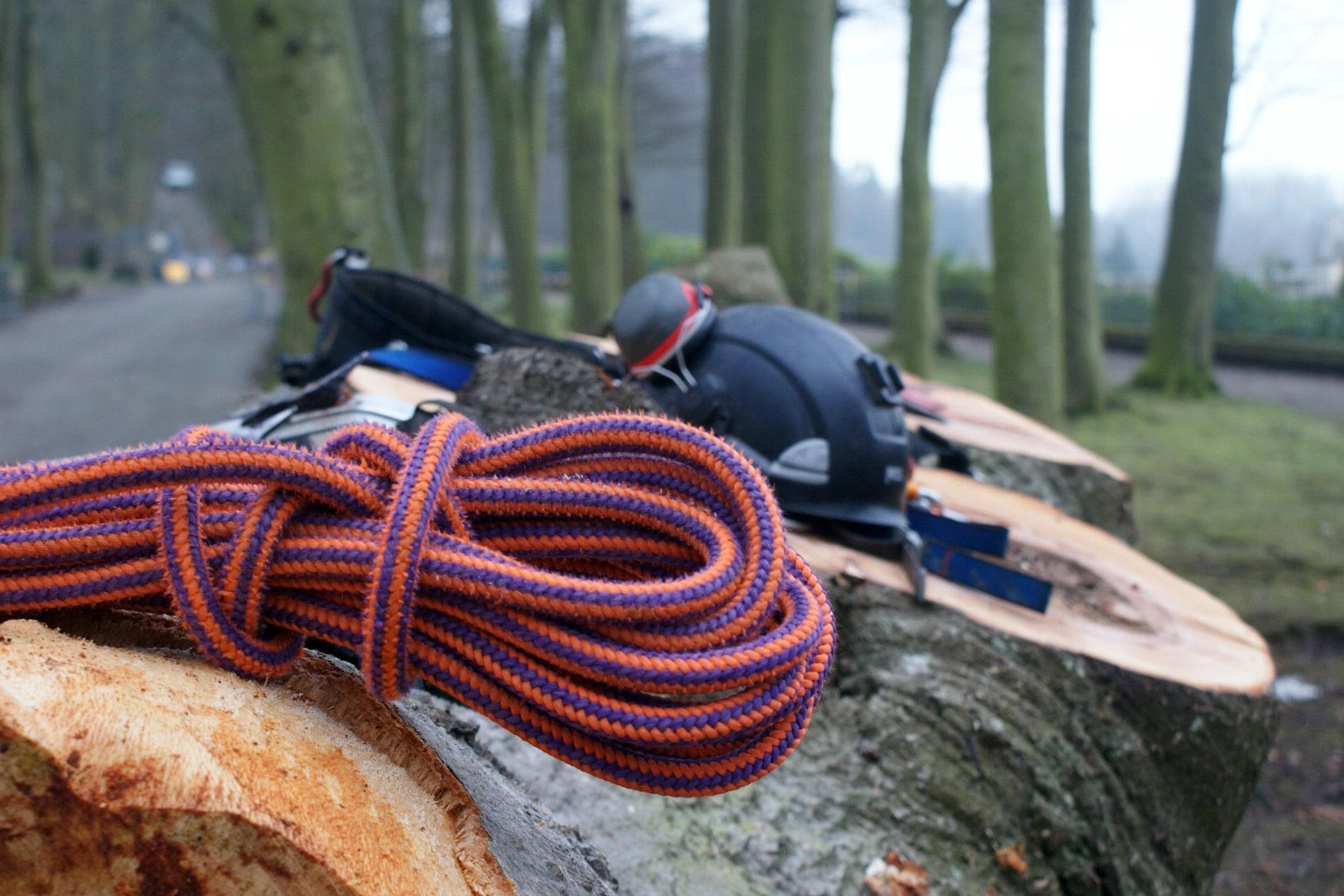 élagage d'arbre, taille et haubanage à Rouen