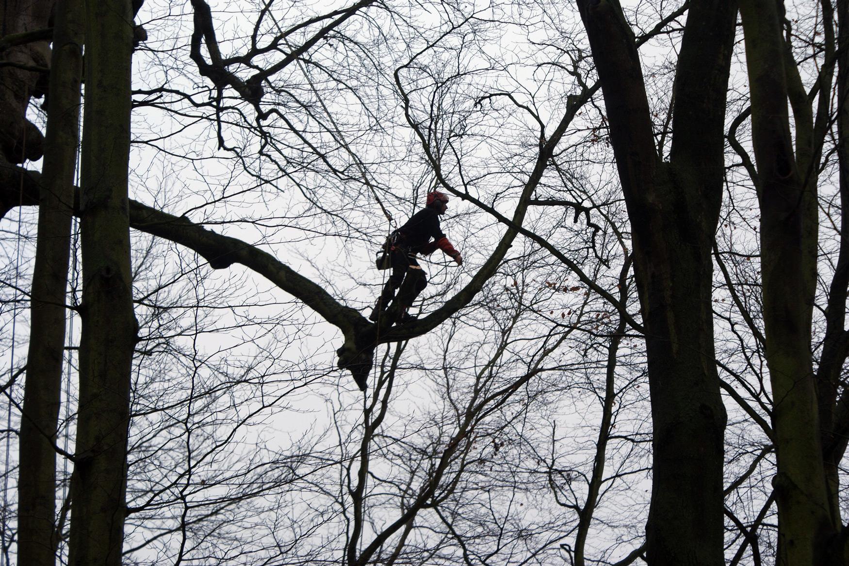 élagage d'arbre en Normandie
