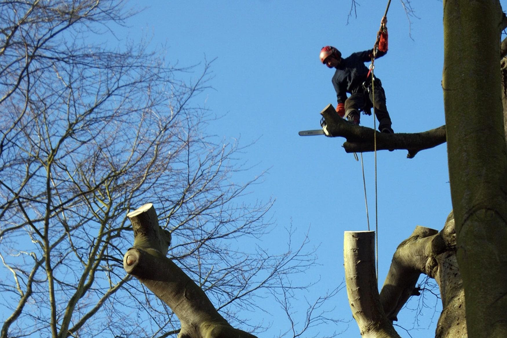élagage d'arbre, taille et haubanage en Normandie