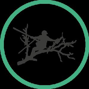 Le Savoir Vert, élagage d'arbres à Rouen