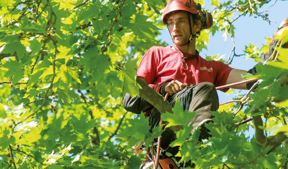 Le Savoir Vert, entreprise espaces verts rouen