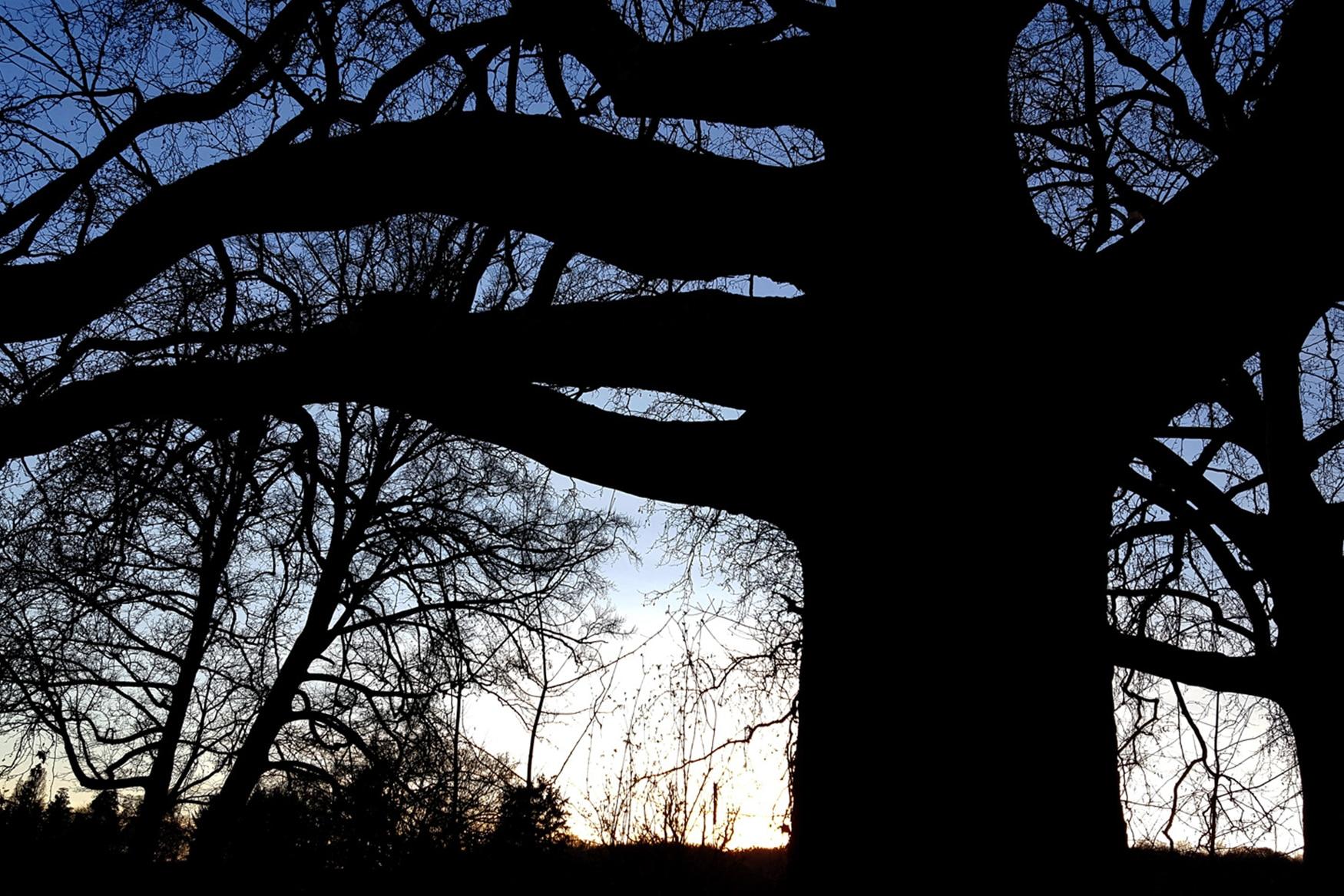 Haubanage et sécurisation des arbres remarquables